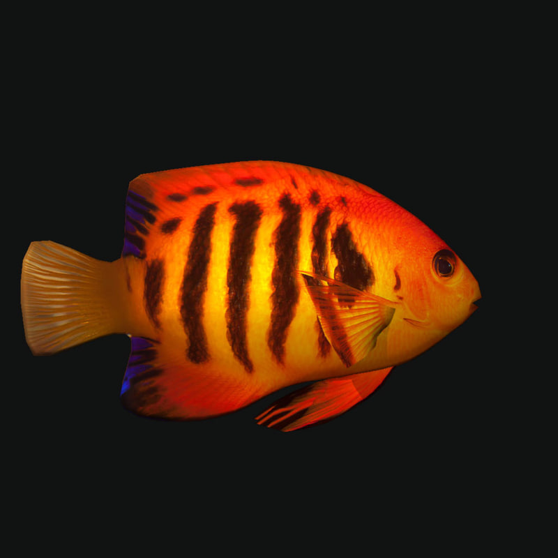3D flame angelfish
