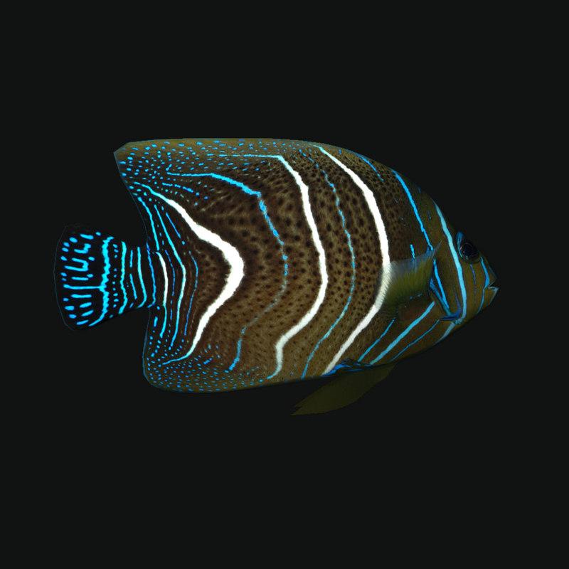 3D model koran angelfish