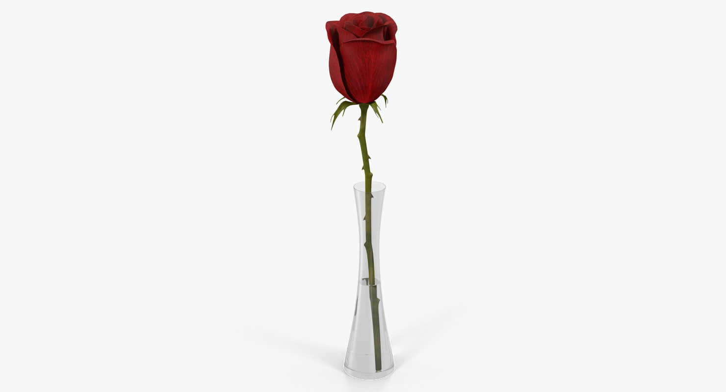 red rose vase model