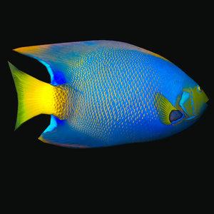 3D queen angelfish
