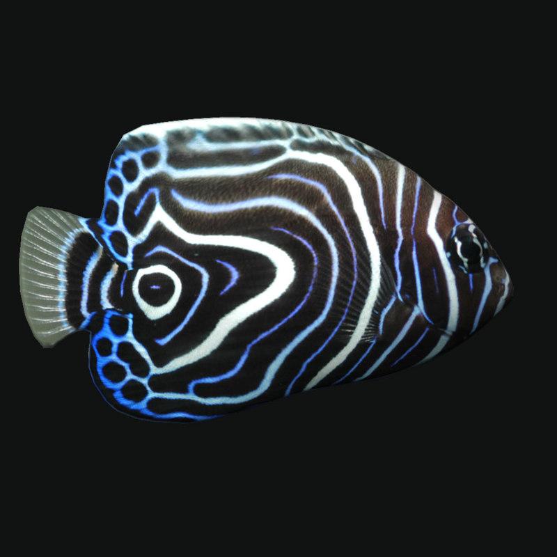 3D juvem fish model