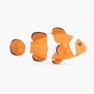 clownfish amphiprion ocellaris 3D