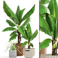 3D banana palm