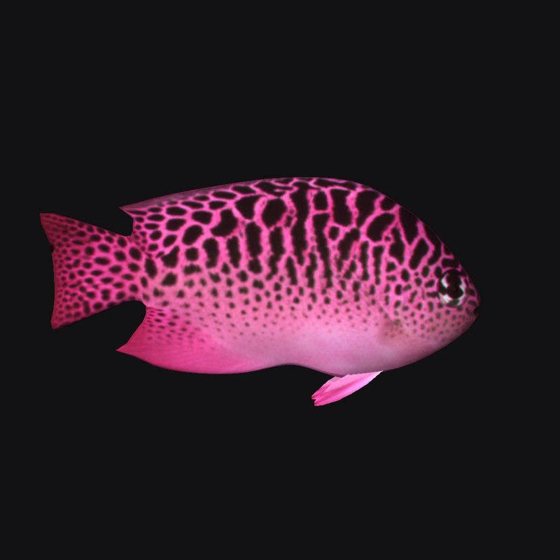 ocean fish 3D