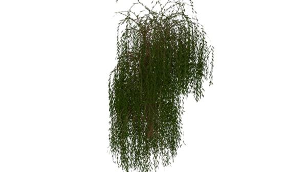 3D willow tree