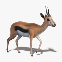 gazelle fur rigging 3D model
