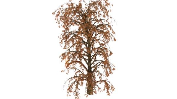 willow tree model