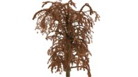 willow tree 3D