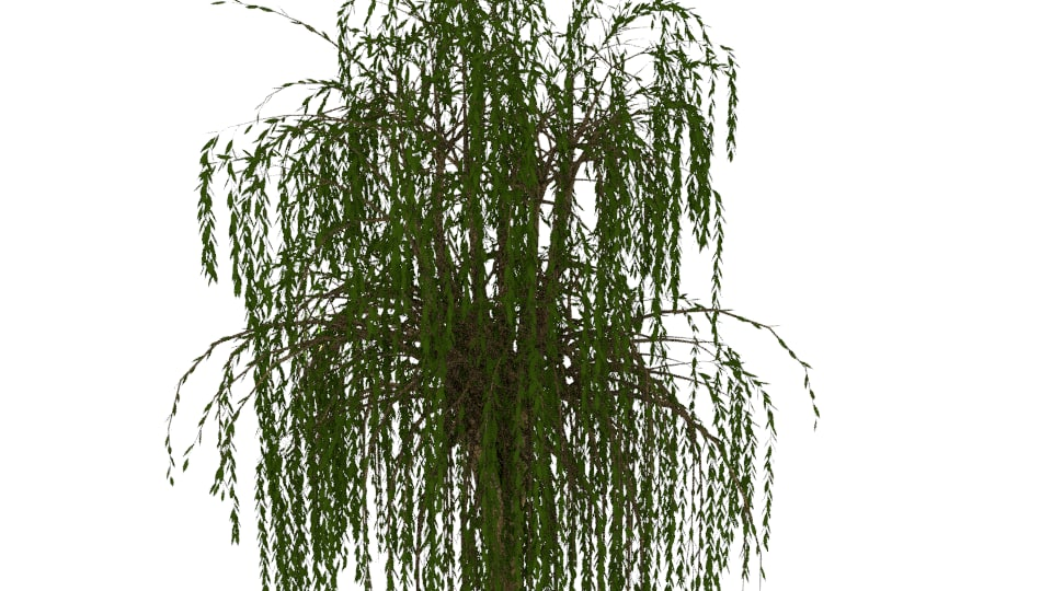 3D willow tree