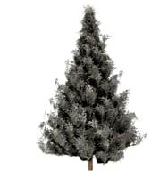 spruce tree snow model