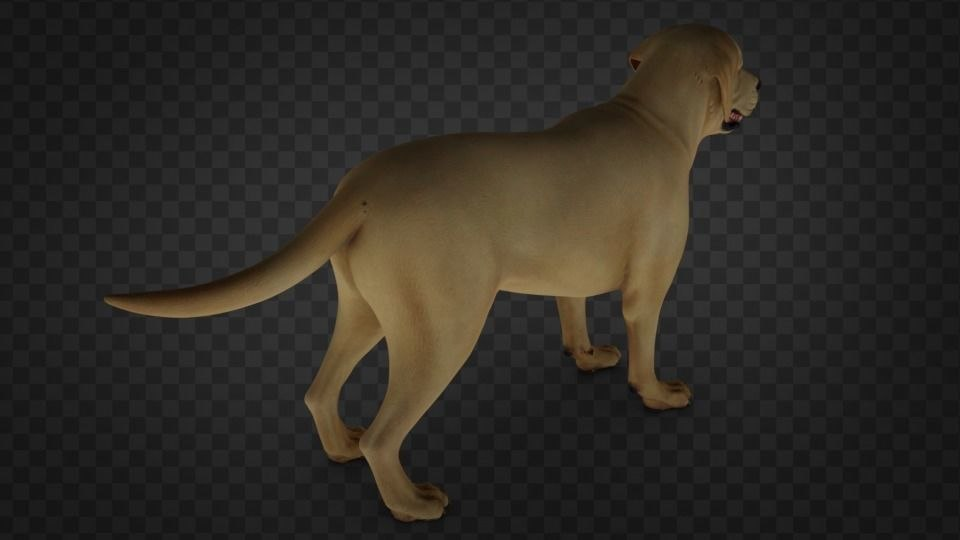 3D dog animal labrador model