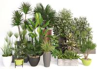 Plants 19
