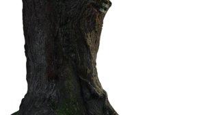 trunk acacia tree 3D