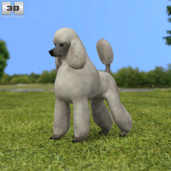 real 3D model