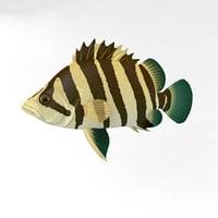 animal fish abudefduf 3D