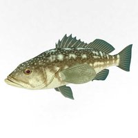 3D fish perch