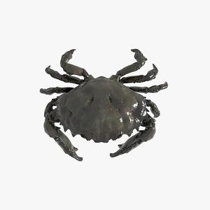 3D model king crab