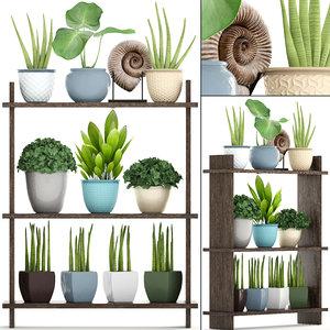 plants tropical sansevieria 3D