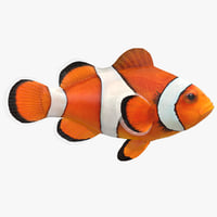 3D clownfish animation