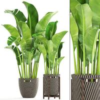 banana palm 3D model