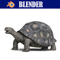 turtle reptile shell 3D