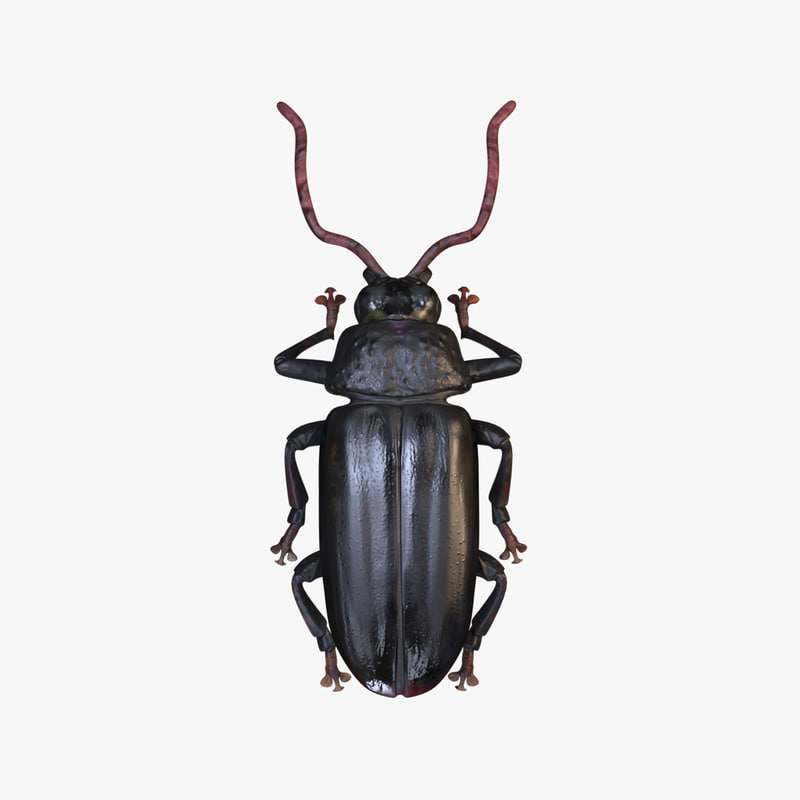 3D beetle woodcutter
