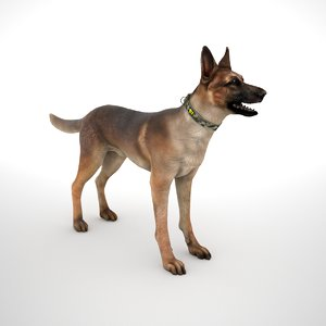 belgian malinois multicam id model