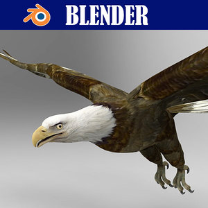 eagle bird animal model