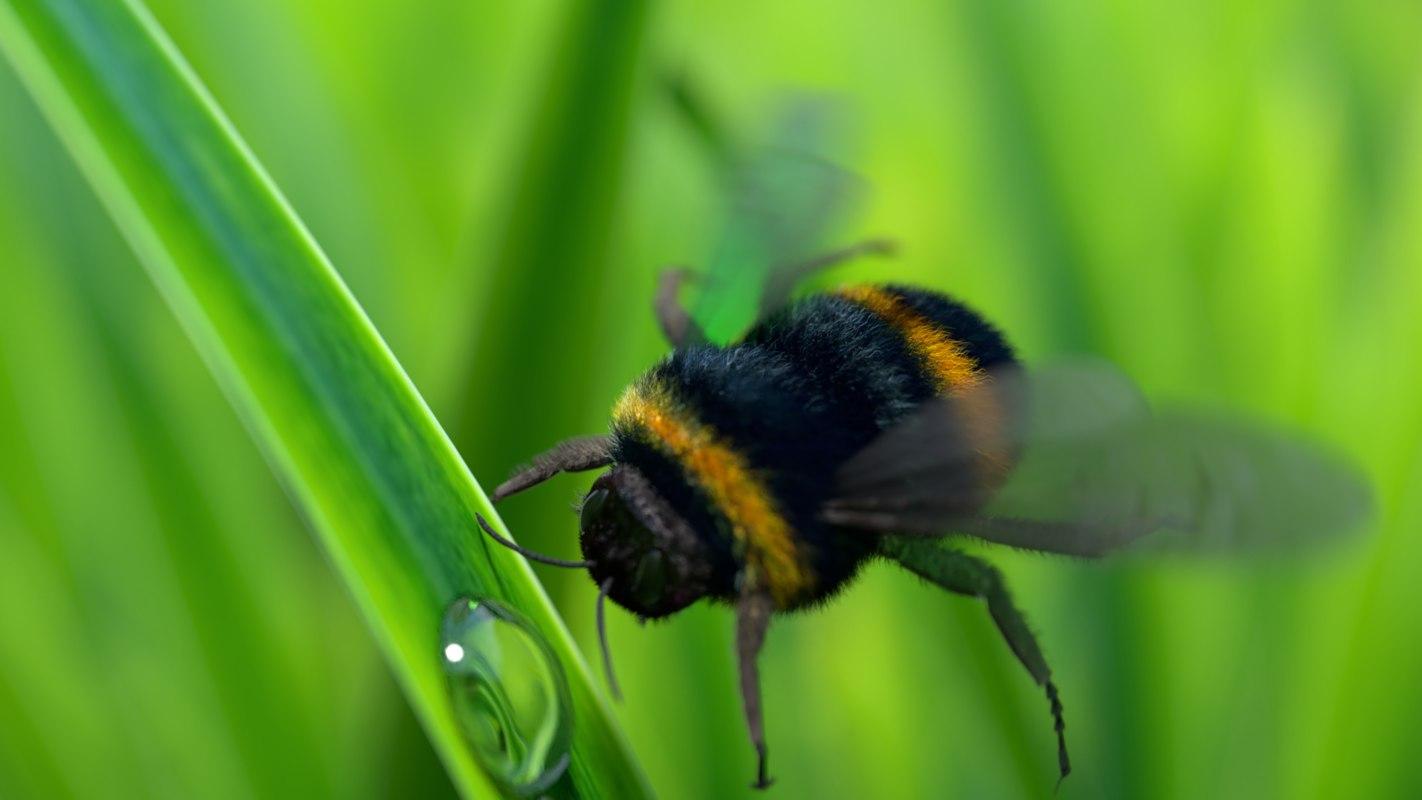 3D model bee rendered photo