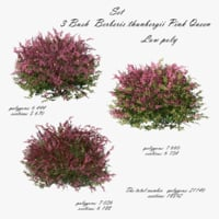 Bush Berberis thunbergii Pink Queen 3D model