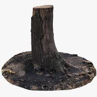Oak Stump 11