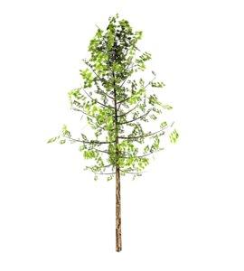 birch tree wind animation model