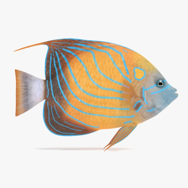 3D blue ring angelfish model