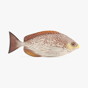 java rabbitfish 3D model