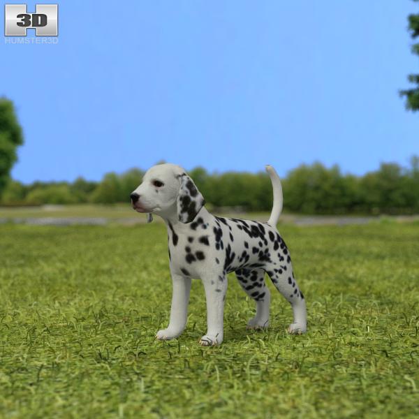 dalmatian dal puppy 3D model