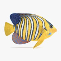 royal angelfish 3D