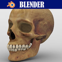3D anatomy skull