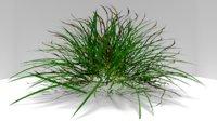 hight plant 3D model
