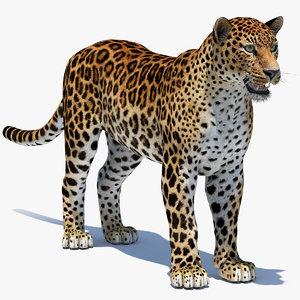 amur leopard 3D model