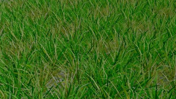 3 grass 3D model
