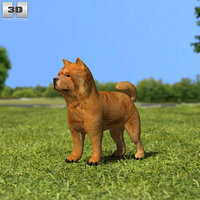 chow 3D model