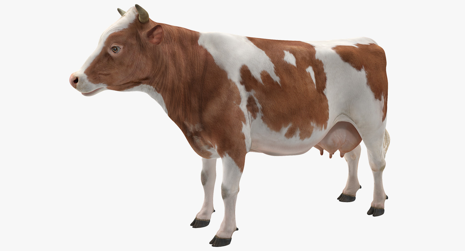 3D model cow realistic