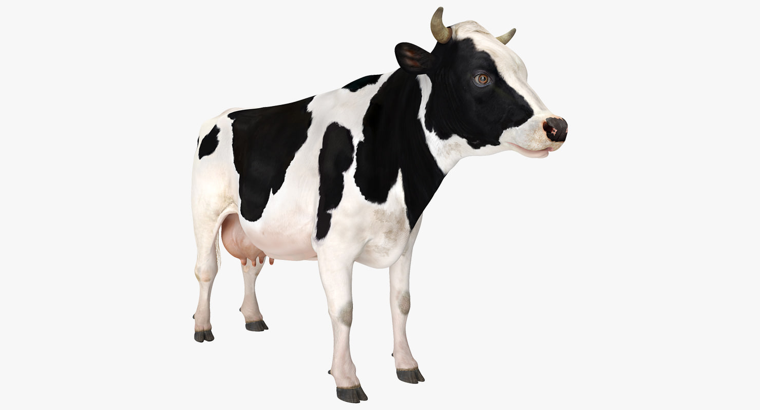 3D dairy cow model