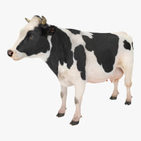 3D dairy cow fur