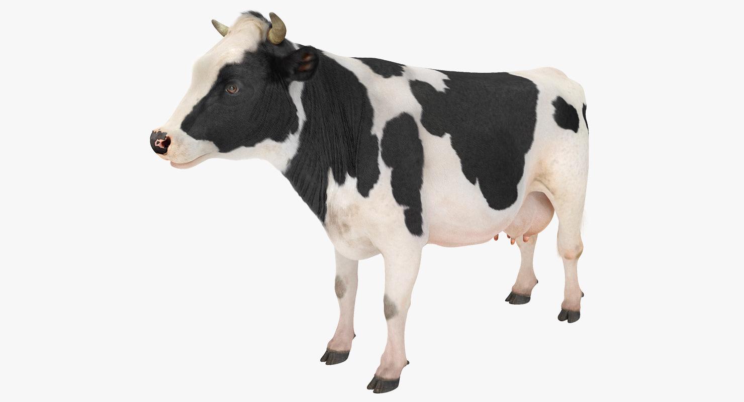 Cow 3d Models For Download Turbosquid