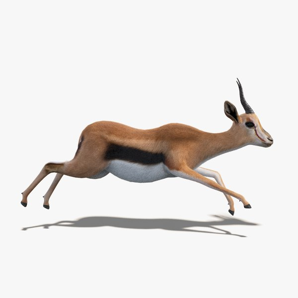 3D gazelle fur animation rig model