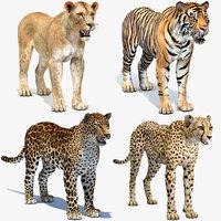 3D big cats 04