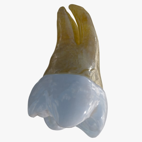 upper molar 3D model