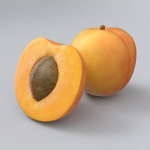 3D apricot real realistic model