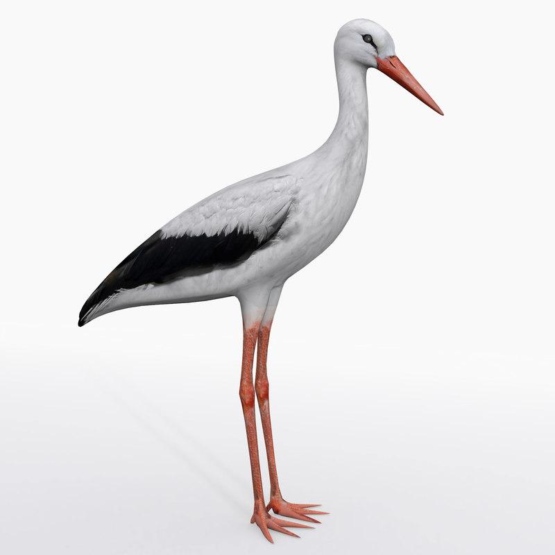storks birds animation 3D